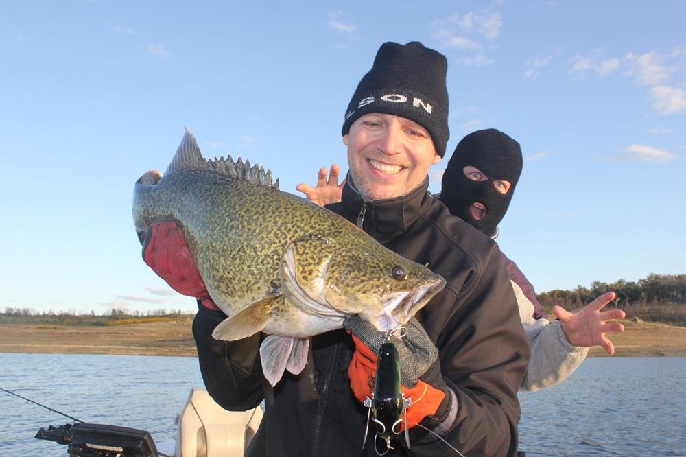 Wilson Fishing – Mega Murray Cod